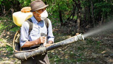 Photo of יתוש נמר אסייתי – טיפול להעלמה שלו