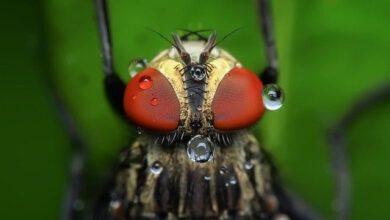 Photo of מה שלא ידעתם על הדברה נגד יתושים